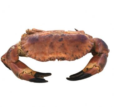 Whole Cock Crab
